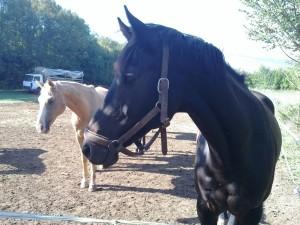 HORSEBACK RIDING SPLIT OPCIJA TOURS